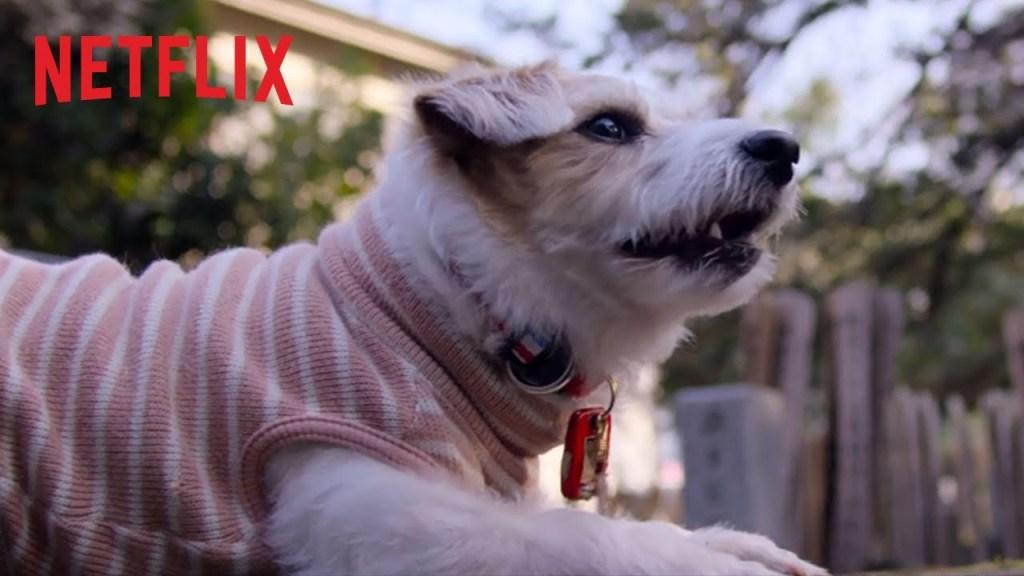 Nos amis les chiens   Bande-annonce officielle [HD]   Netflix