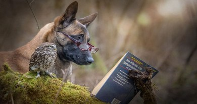 Friendship between an owl and a dog- netmarkers