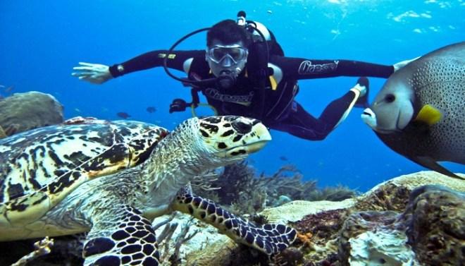 scuba diving-Net Markers