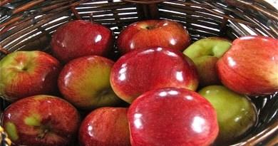 shiny foods-Netmarkers