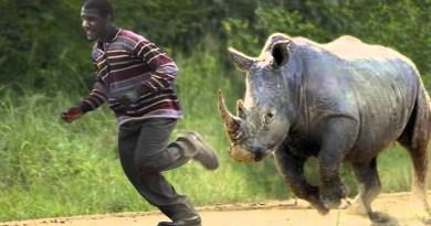hippos-Netmarkers