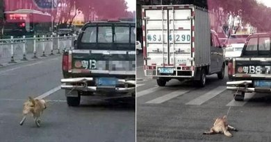 Dog cruelty- pic shows dog being dragged to death- Netmarkers