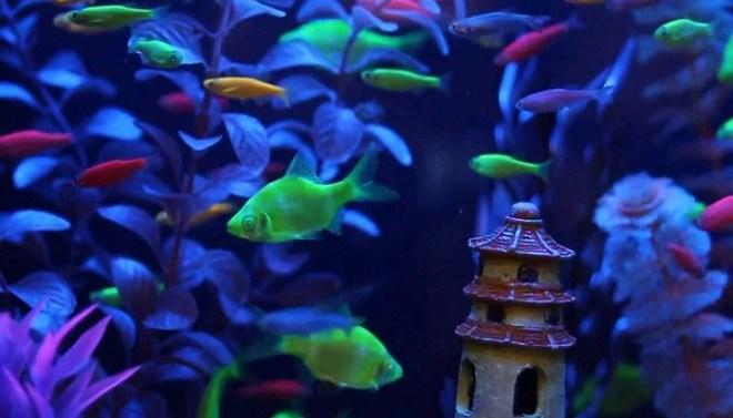 GloFish-Netmarkers
