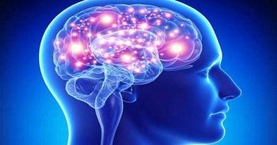 brain-Netmarkers