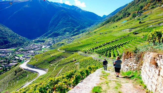 The Chemins des Vignes- Switzerland-Netmarkers