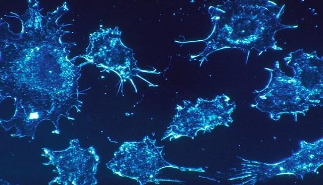 cancer-Netmarkers