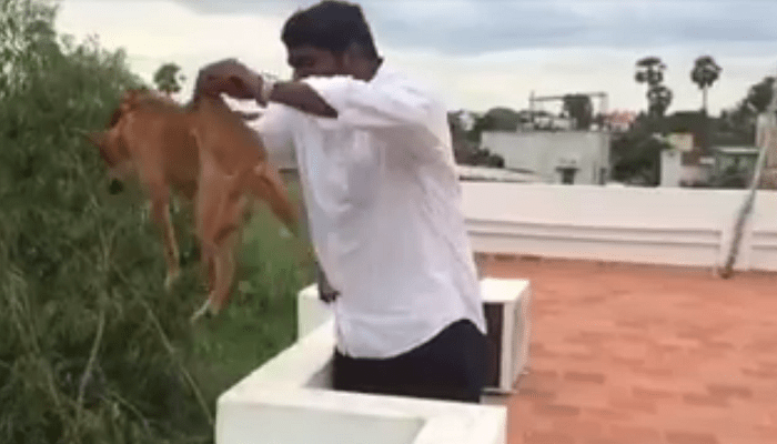 man-who-threw-dog-from-roof-identified-as-mbbs-student-Netmarkers