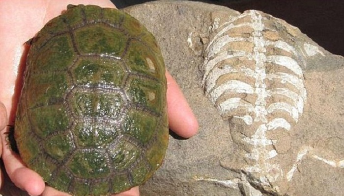 shell of turtle-Netmarkers