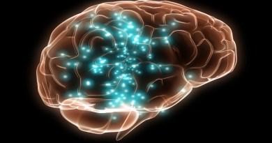 memory in brain-Netmarkers