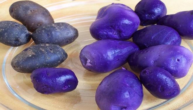 purple potato-Netmarkers
