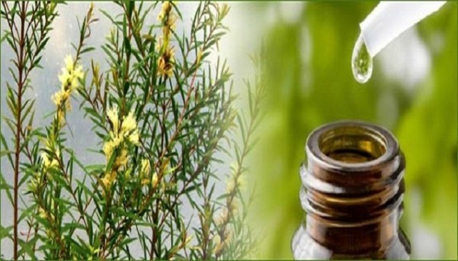 tea tree oil for acne-Netmarkers