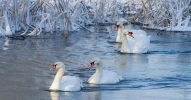 The Swan-netmarkers