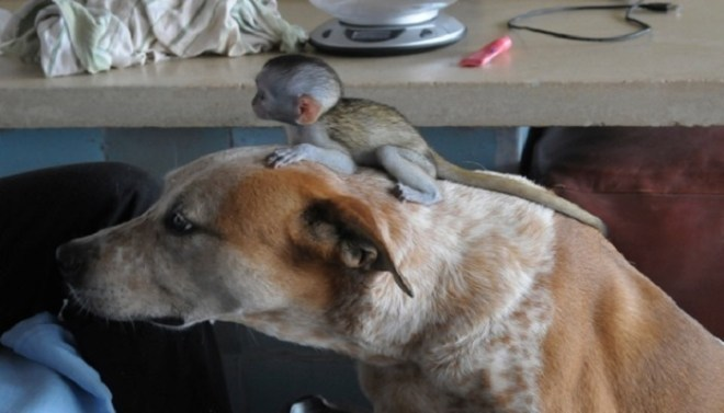 The nurturing nature of dog named princess-netmarkers