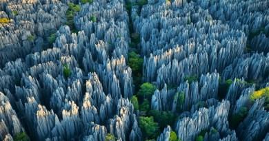 tsingy-forest-madagascar-netmarkers