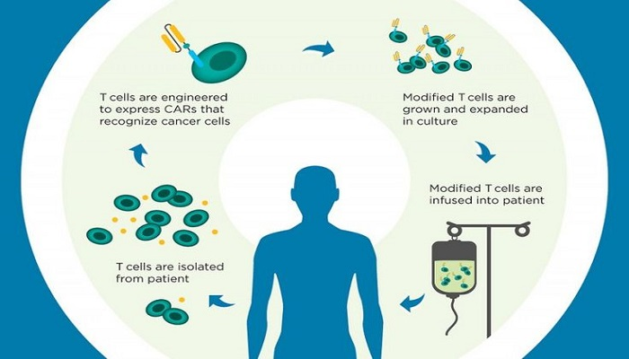 t-cell-therapy-will-be-the-last-resort-in-fighting-cancer-netmarkers