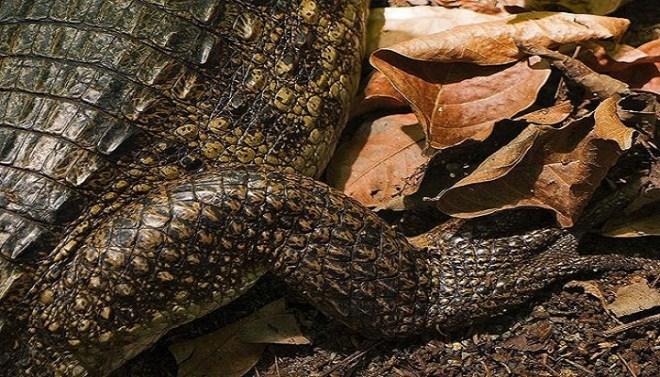 crocodile-skin-netmarkers