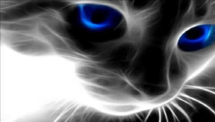 cats-with-magical-powers-netmarkers