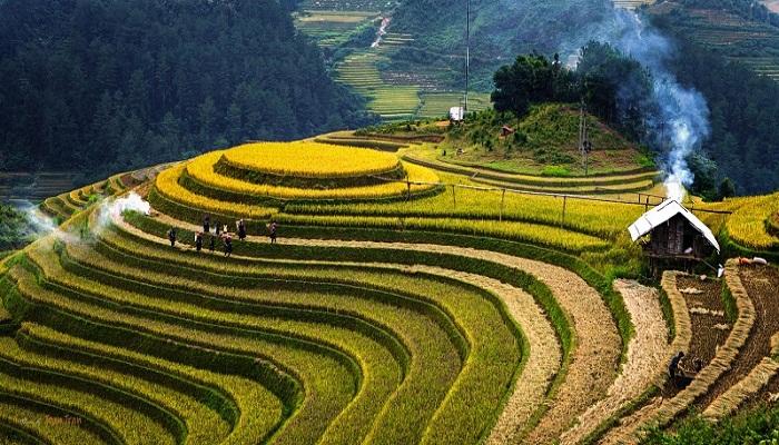 Mù-Cang-Chải-Vietnam-Netmarkers