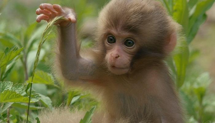 Monkey-Netmarkers