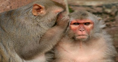 what if monkeys can talk-Netmarkers