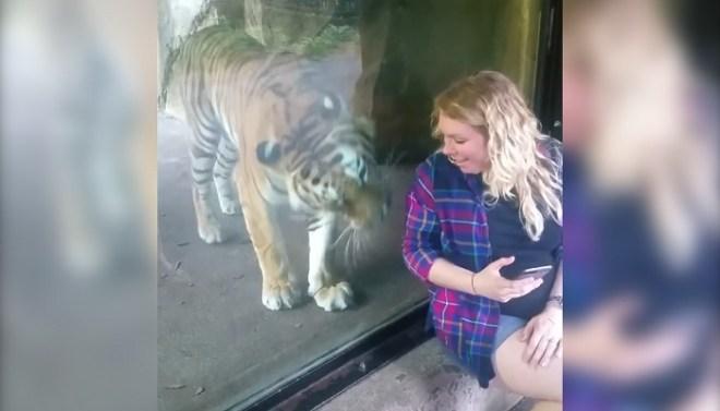 tiger pampering woman