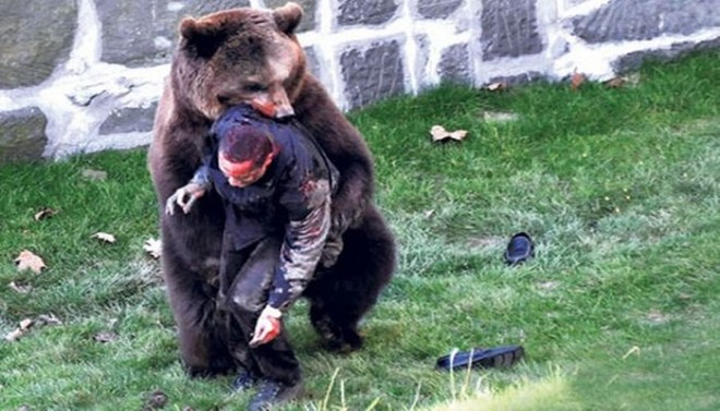 Brown Bears netmarkers