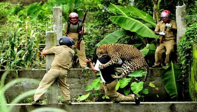 Leopards netmarkers