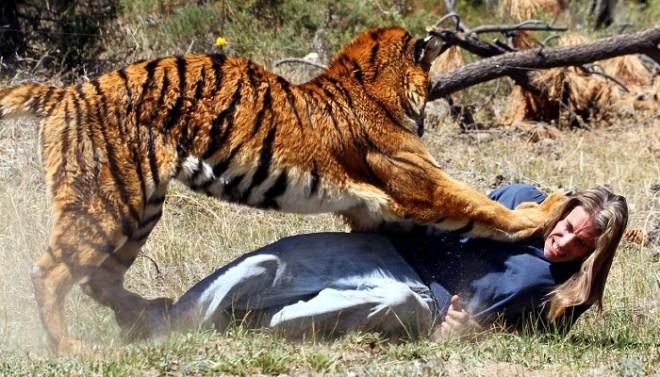 Tigers netmarkers