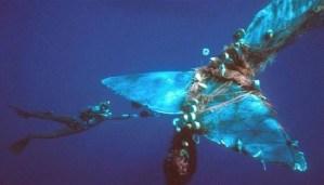 When-sea-animals-get-stuck-in-trash-netmarkers