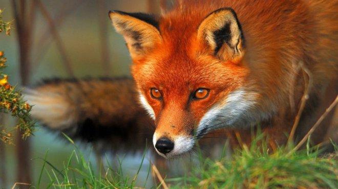 RedFox-netmarkers