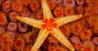 Top 10 beautiful starfishes on this earth
