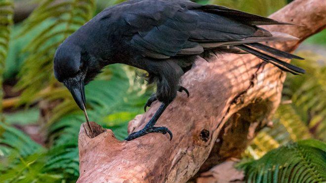 Crows-netmarkers