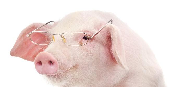 Pigs-netmarkers
