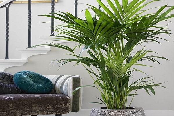 palm-netmarkers