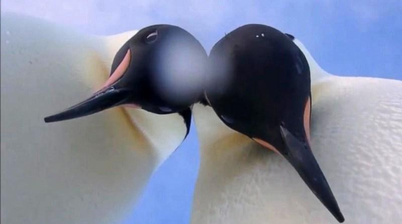 penguin2-netmarkers
