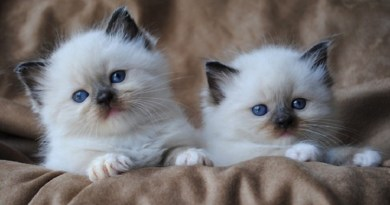 cutestcat-netmarkers