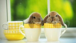rabbits-netmarkers