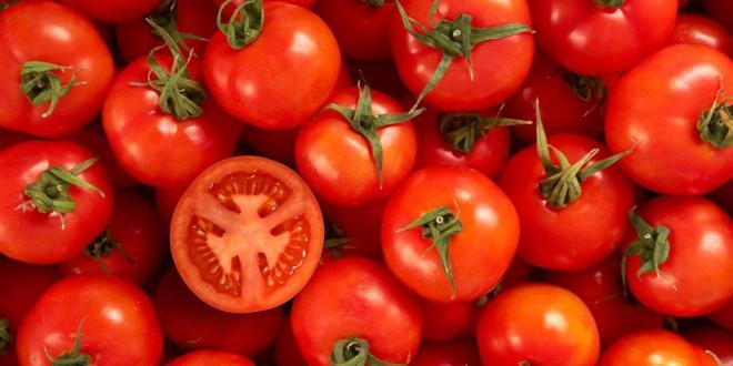 tomatoes-netmarkers