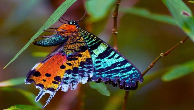 Sunset moth-Netmarkers