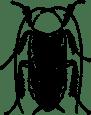Roache