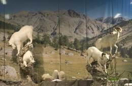USA: Blinde skal også gå på jagt