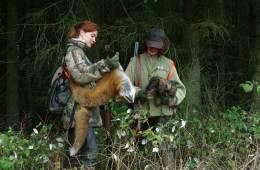 En række kunstige rævegrave er blevet et vigtigt våben i kampen for at holde liv i flere truede fuglearter ...