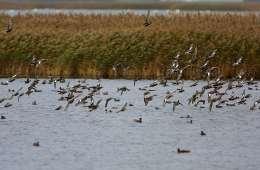 Årets første tilfælde af fugleinfluenza er fundet i en and, skudt under en jagt i den østlige del af Tyskland, oplyser EU-Kommissionen.