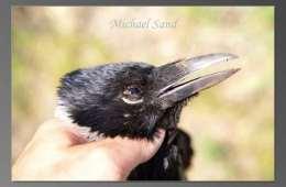 Slut med den fri krageregulering
