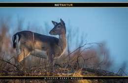 Bryd monopolet på jagttidsforhandlingerne