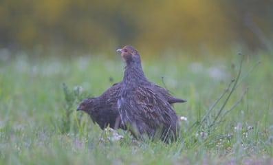 Skab fuglehuller i kæmpemarkerne
