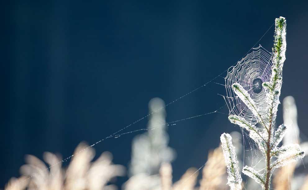 Jagttegnsmidler til musebeplantninger