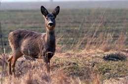 Kalve-misfostre øger fokus på kobbersulfat