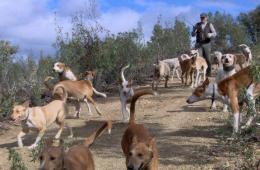 Penge i stedet for jagt til spanske hundefolk