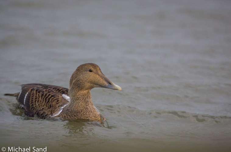 Viden om: Beredskabsplan for havfugle og havpattedyr